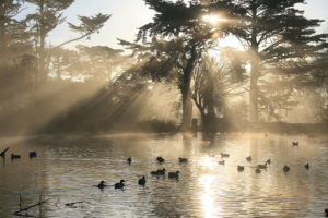 Stow Lake at Golden Gate Park.Photo by Brocken Inaglory.